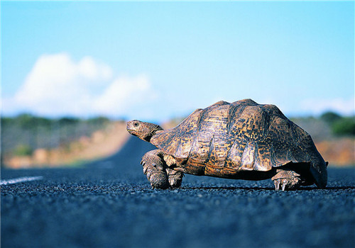 养龟的基本要诀
