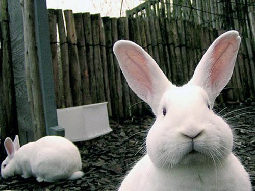 配种 提高 成功率 如何 兔兔/下一篇: