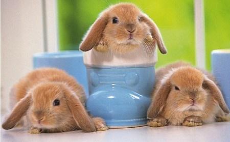 小型宠物兔品种大汇总-轻博客