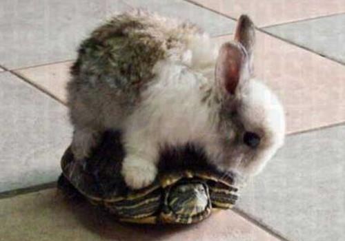 兔子真的跑不过乌龟吗?