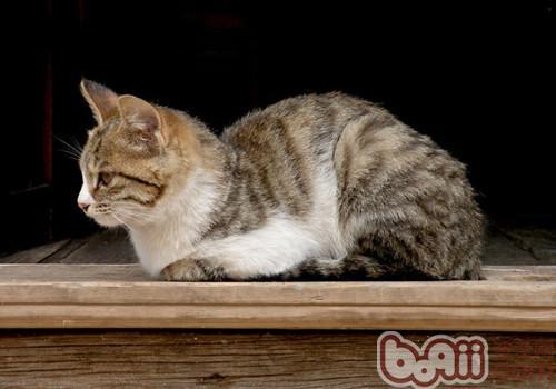 猫咪真的没有狗狗忠诚吗-轻博客