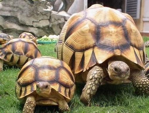 饲养陆龟的七条法则