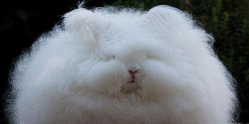 兔兔在不同季节的饲养管理