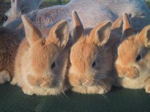 活泼可爱的忌廉兔