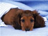 狗狗感冒的几种治疗方法