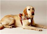巧遇导盲犬我们应该怎么做