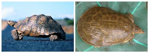 龟与鳖的区别