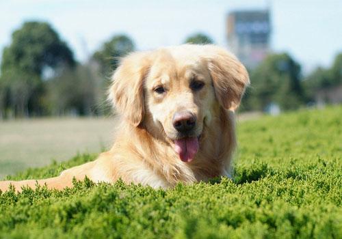 判断狗狗年龄的四个关键点