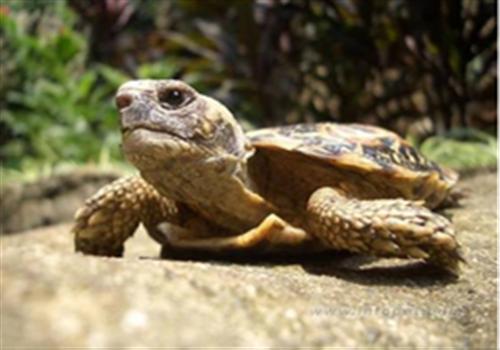 为饼干龟搭建适宜生活环境