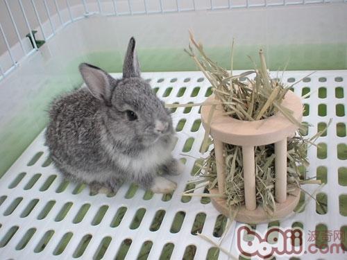 兔子为什么会磨牙?-轻博客