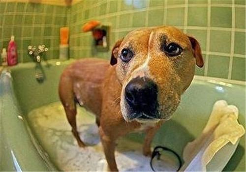 怎么给狗狗洗澡?