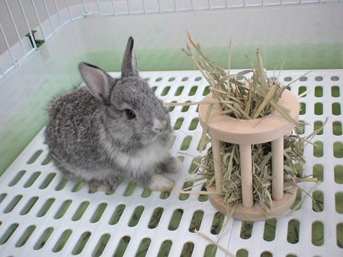 兔子为什么会磨牙?