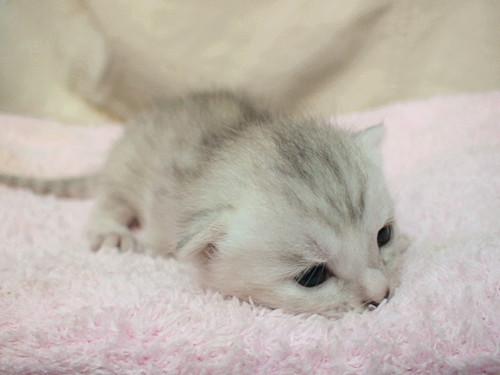 照顾好您的幼猫