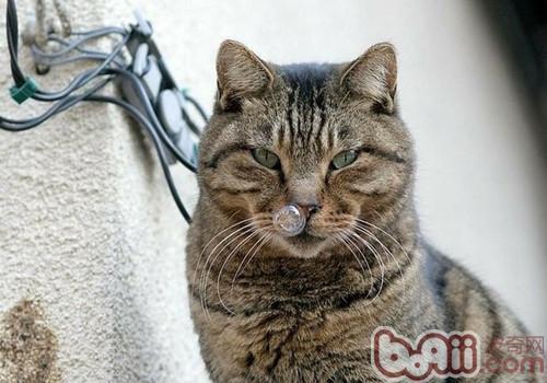 猫不是通过味道来判断食物的