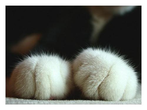 不要碰猫咪的肉垫