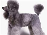 狗狗断尾的几种原因