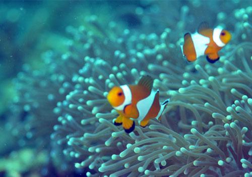 鱼的鼻孔是用来干吗的