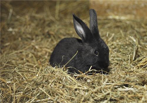 制作兔兔饲料的常用原料
