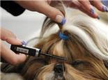 导致狗狗毛发粗糙的几大原因