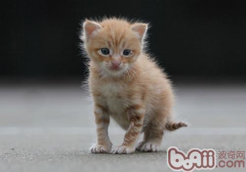 彩铅猫咪步骤图片大全