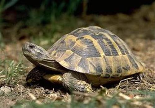 健康陆龟判断准则