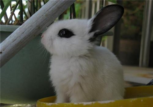 家兔冬繁并不难