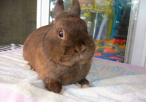 防治兔病的给药方法