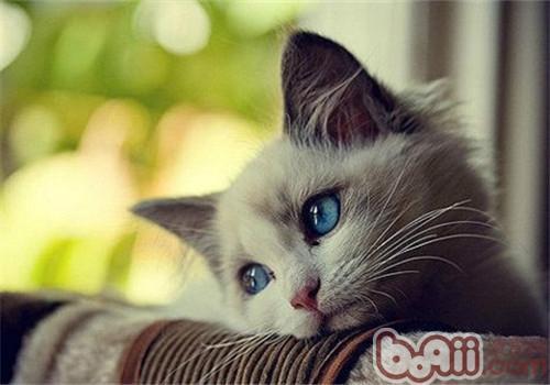 猫咪是我们非常喜爱的小宠物