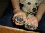定期为狗狗修剪指甲的好处