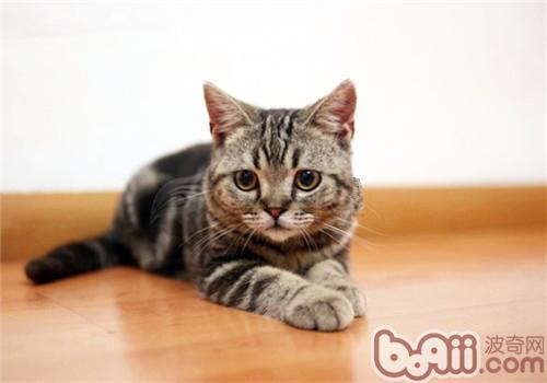 长毛猫和短毛猫由于其身体结构的差异,饲养者为其梳理毛发的方法和工