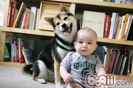 如何训练宠物不和宝宝争宠