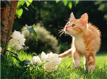 猫口腔溃疡的诊治