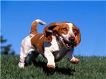 狗狗营养过剩也会导致疾病