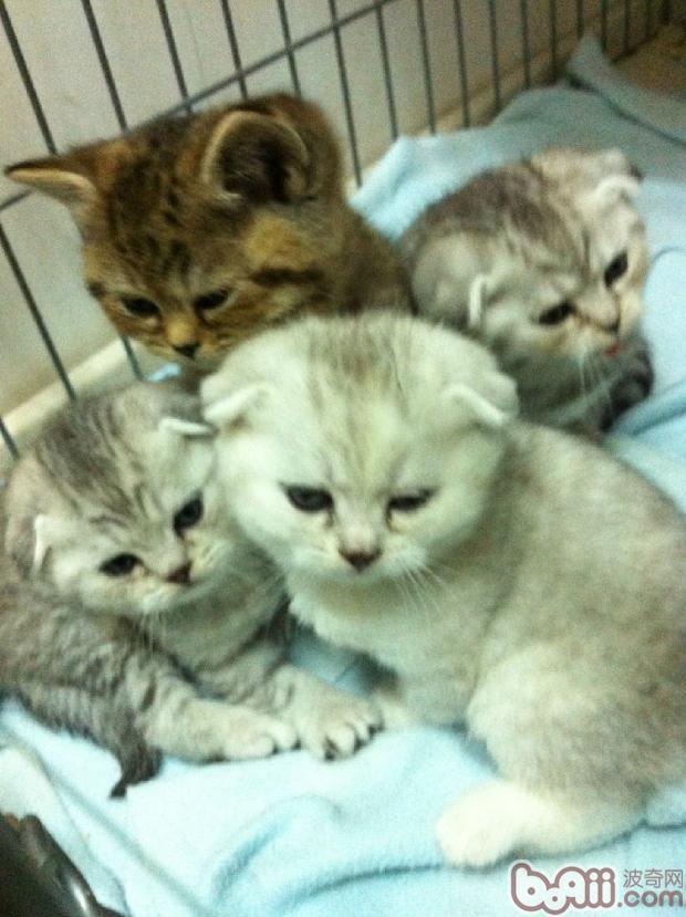 多猫家庭的小贴士