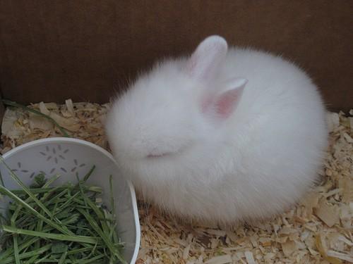 兔兔消化不良会引起腹泻