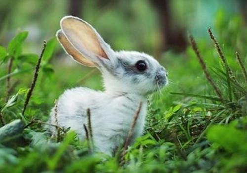 兔子卡他性肺炎的防治措施