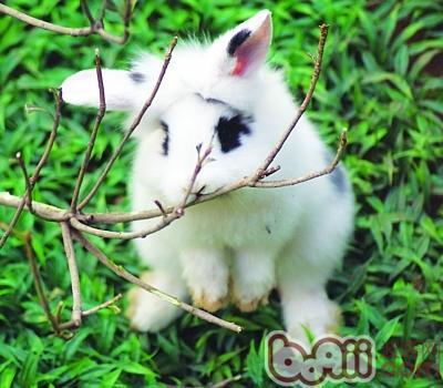 壁纸 动物 兔子 400_350