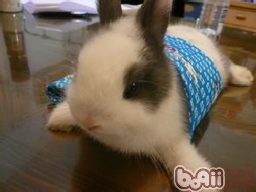 兔子疫苗使用六个注意事项
