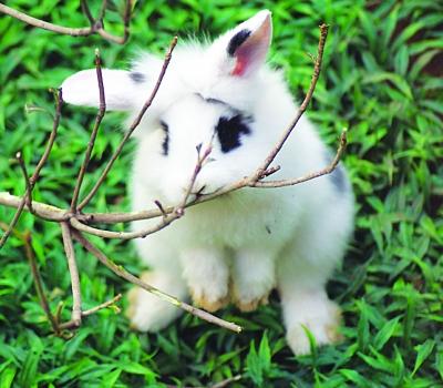 为什么兔星人喜欢啃咬笼具?