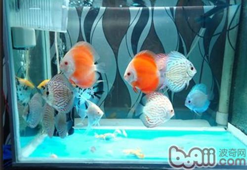 二氧化氯消毒鱼缸的用法及用量-轻博客