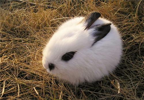 兔子厕所要如何布置