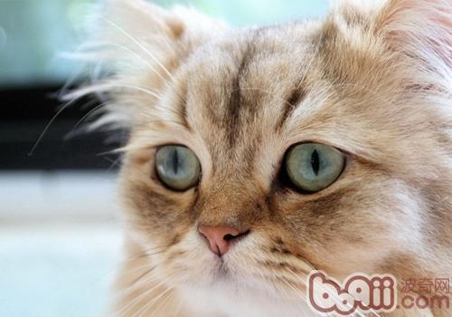 安装猫的步骤图解