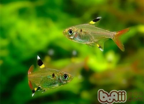鱼和蛙设计