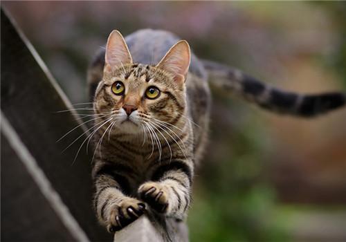 猫咪能输血吗?