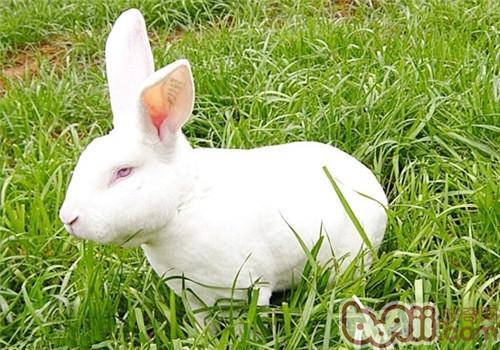 可爱小兔子图片大全