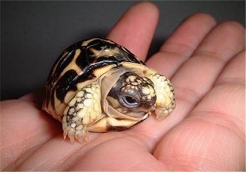 龟的品相重要吗?