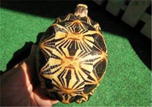 养龟前要考虑的问题