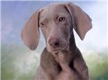 四种狗狗肠胃不适的解决办法