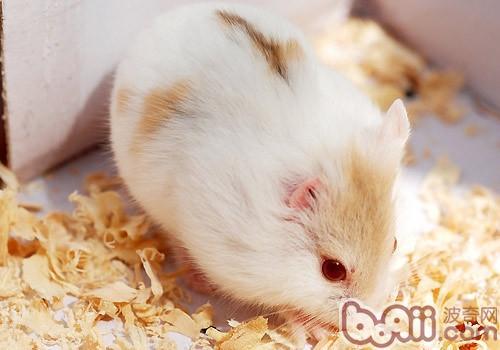 仓鼠身体结构图