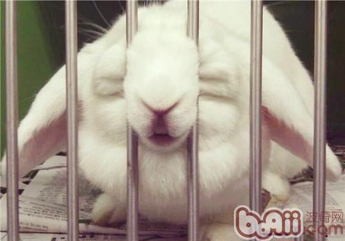 三招教宠物兔乖乖回笼